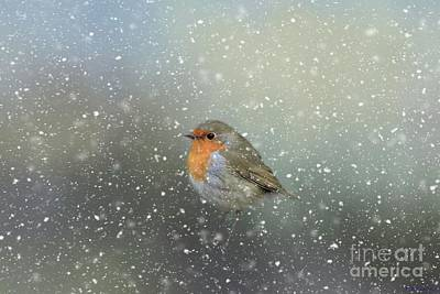 Robin In Winter Poster