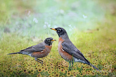 Robins, Heralds Of Spring Poster by Bonnie Barry