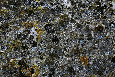 Rock Lichen Surface Poster