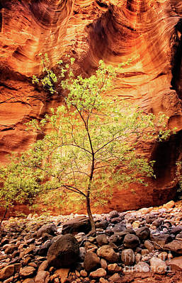 Poster featuring the photograph Rock Tree by Scott Kemper