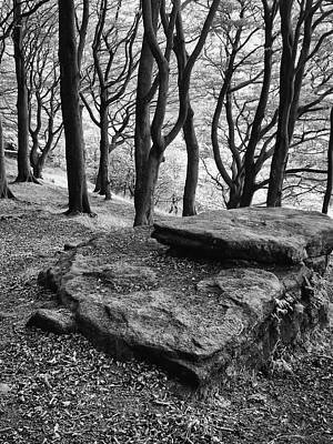 Rocks Over The Woods  Poster by Philip Openshaw