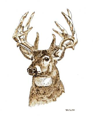 Rocky Mountain Mule Deer Poster by Pat Sloss