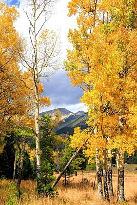Rocky Mountains In Autumn Aspens Poster by Dan Sproul