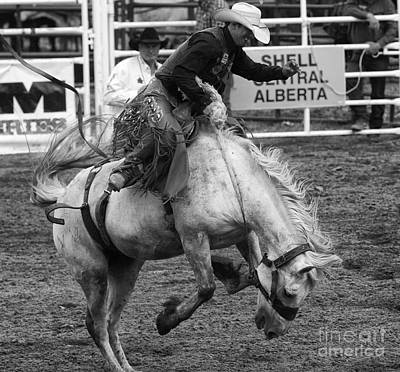 Rodeo Saddleback Riding 3 Poster by Bob Christopher