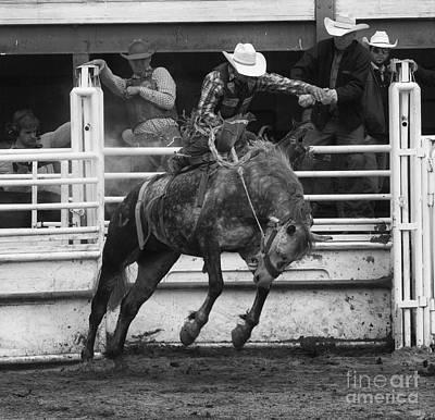 Rodeo Saddleback Riding 4 Poster by Bob Christopher