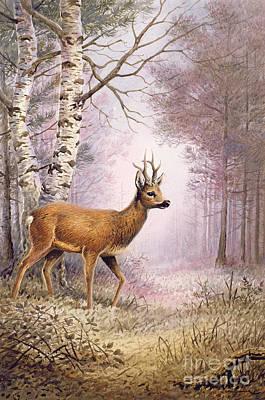 Roe Deer Poster by Carl Donner