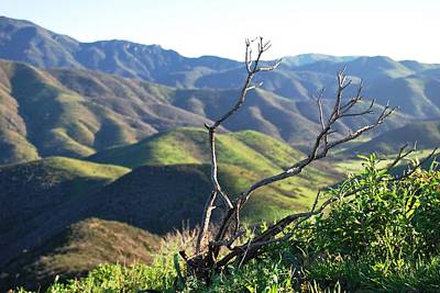 Poster featuring the photograph Rolling Green Hills With Dead Branches by Matt Harang