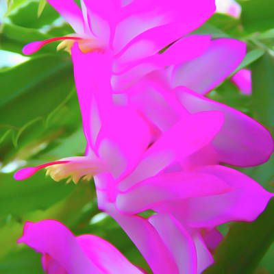 Poster featuring the photograph Romantic Skies Christmas Cactus Flower by Aimee L Maher Photography and Art Visit ALMGallerydotcom