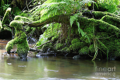 Roots Covered By Moss In Creek Poster by Michal Boubin