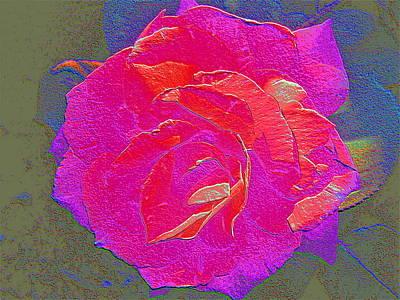 Rose 84 Poster by Pamela Cooper