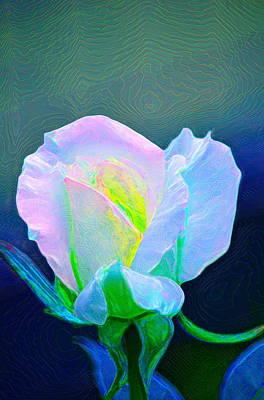 Rose 86 Poster by Pamela Cooper