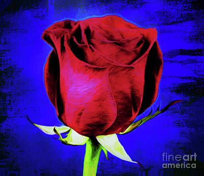 Rose - Beauty And Love  Poster by Ray Shrewsberry