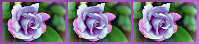 Rose For Love Poster