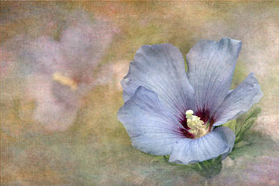 Rose Of Sharon - Hibiscus Poster by Angie Vogel