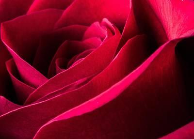 Rose Of Velvet Poster