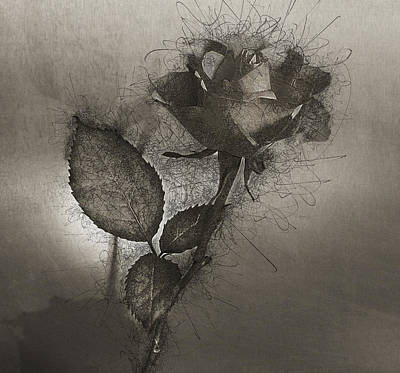 Poster featuring the photograph Rose Variation#04 by Richard Wiggins