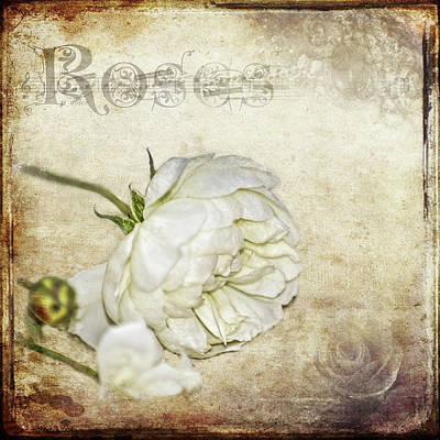 Roses Poster by Carolyn Marshall