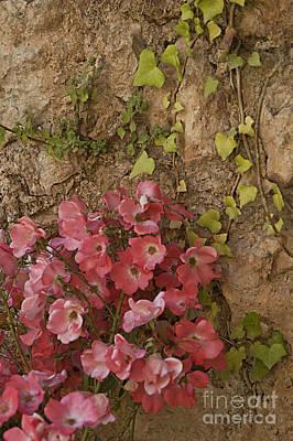 Roses In Spain Poster
