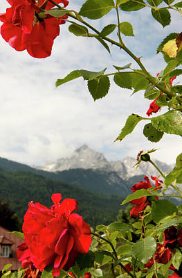 Poster featuring the photograph Roses Of The Zugspitze by KG Thienemann