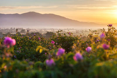 Roses Valley Poster by Evgeni Dinev
