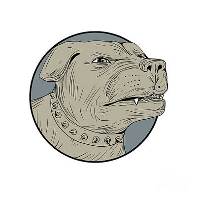 Rottweiler Guard Dog Head Angry Drawing Poster