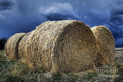 Poster featuring the photograph Round Bales by Brad Allen Fine Art