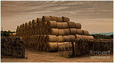 Round Hay Bales  Poster