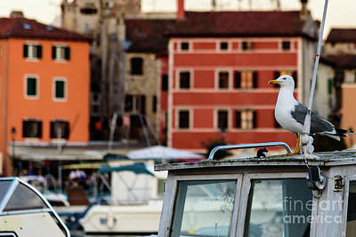 Rovinj Harbor Seagull - Rovinj, Istria, Croatia Poster