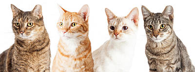 Row Of Cats Closeup Poster