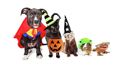 Row Of Household Pets In Halloween Costumes Poster