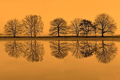 Row Of Trees Reflected In Water In Light Rising Sun, Netherlands Poster