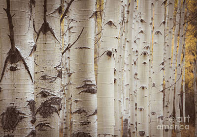Poster featuring the photograph Rows by The Forests Edge Photography - Diane Sandoval