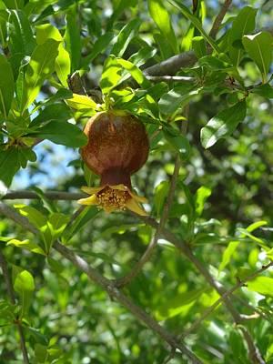 Royal Onion Pomegranate Poster