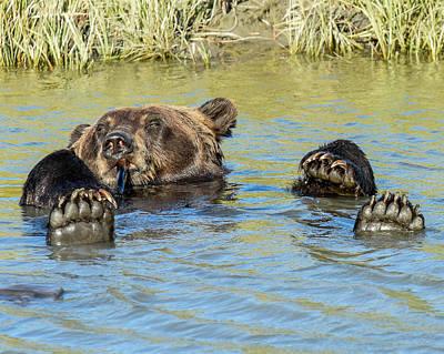 Rub A Dub Dub A Bear In His Tub Poster