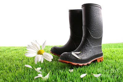 Rubber Boots With Daisy In Grass Poster by Sandra Cunningham