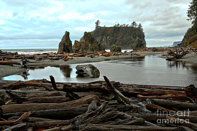 Ruby Beach Driftwood Poster