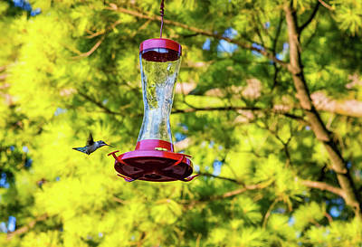Ruby-throated Hummingbird 3 Poster