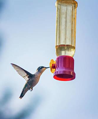 Ruby-throated Hummingbird 4 Poster