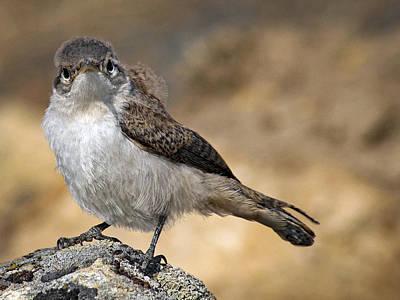 Ruffled Baby Bird By Jean Noren Poster by Jean Noren