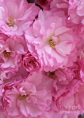 Ruffly Pink Blossoms Poster