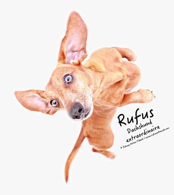 Rufus Dachshund Extraordinaire  Poster