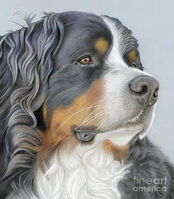 Poster featuring the painting Regal And Relaxed by Donna Mulley