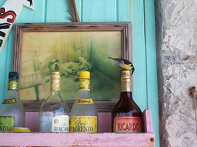 Poster featuring the photograph Rum Shack Bananaquit by Mary-Lee Sanders
