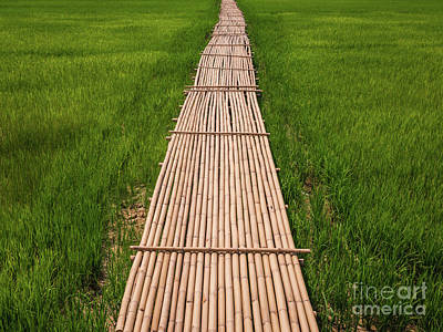 Poster featuring the photograph Rural Green Rice Fields And Bamboo Bridge. by Tosporn Preede