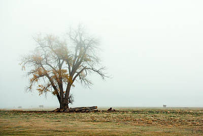 Rural Pasture And Tree Poster by Todd Klassy