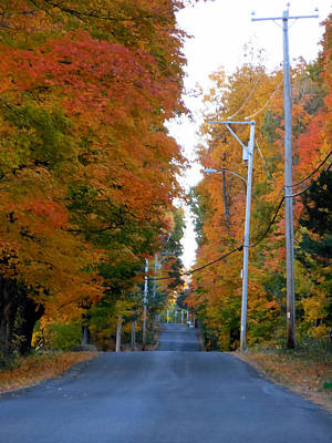 Rural Road Running Along The Maple Trees In Autumn 1 Poster by Lanjee Chee