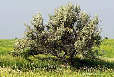 Russian Olive On The Prairie Poster by Don Durfee