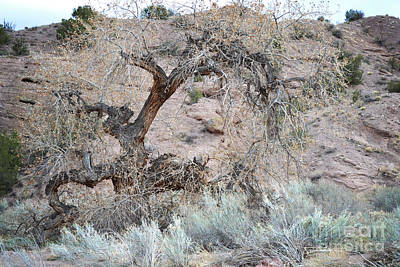Poster featuring the photograph Rustic Desert Tree by Andrea Hazel Ihlefeld