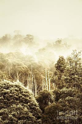 Rustic Tasmanian Rural Forest Poster