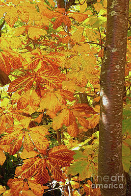 Rusty Autumn Fall Color Leaves In The Blue Ridge Ap Poster by Dan Carmichael